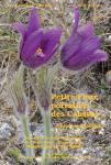 Petite Flore portative des Causses