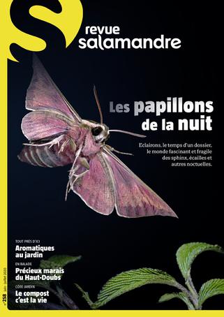 La Salamandre, 258 - Les papillons de nuit