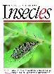 Insectes, 181 - bulletin N°181