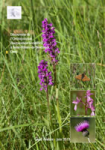 Découverte de l'Orchis occitan Dactylorhiza occitanica à Saint-Hilaire-de-Brethmas, Gard
